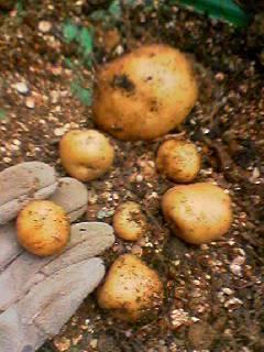 060701_potato