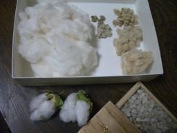 080122_cotton_04