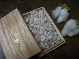 080122_cotton_05