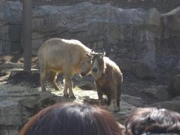 090224_zoo01
